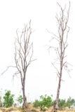 Bare trees die. Stock Image