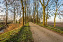 Bare trees on either side of a country road Royalty Free Stock Images