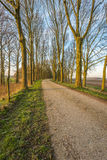 Bare trees on either side of a country road Royalty Free Stock Photos
