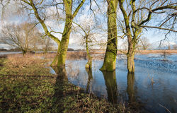 Bare trees in the floodplain lakes Stock Photo