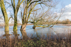 Bare trees in the floodplain lakes Royalty Free Stock Photo