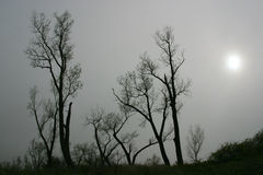 Bare trees in fog. Silhouette of bare trees against a foggy grey sky Stock Image