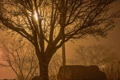 Bare Trees In The Fog Royalty Free Stock Photos