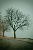 Bare trees in fog Royalty Free Stock Photos