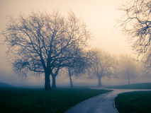 Bare trees in fog within a park Stock Images