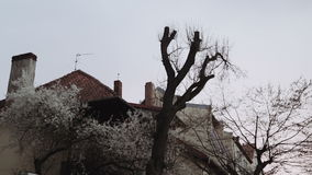 Bare trees in the foreground in a suburban area, a city of European type. The roofs of the houses are lit by sunset. stock footage