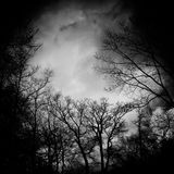 Bare Trees in Greyscale Stock Photo