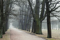 Bare trees grow in a rows along park road in fog. Gy autumn morning Stock Images