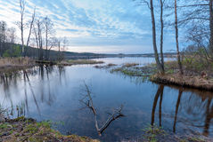 Bare trees growing on the shore of the lake Stock Images