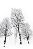 Bare trees with hoar frost Royalty Free Stock Image