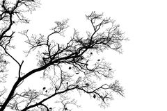 Bare trees isolated on white sky background Stock Photos