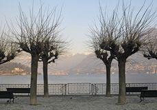 Bare trees by the lake Stock Images
