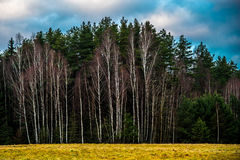 Bare trees. In late autumn landscape, cloudy blue sky Royalty Free Stock Image