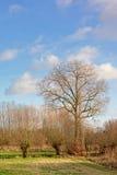Bare trees in the marshland of Bourgoyen nature reserve Stock Photos