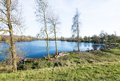 Bare trees and a natural pond Stock Image
