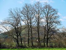 Bare trees park. Bare trees in the park stock photos