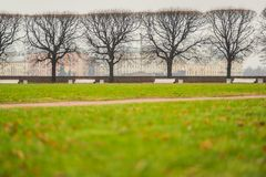 Bare trees and green lawn in the park Royalty Free Stock Photography