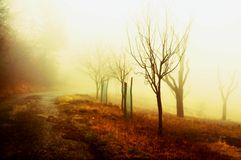 Bare trees and path in warm autumn landscape Stock Image