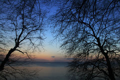 Bare Trees Photo during Sunset Royalty Free Stock Photos