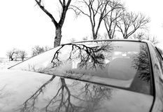 Bare trees reflected in car Royalty Free Stock Photo