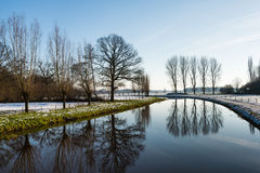 Bare trees reflected in the river Royalty Free Stock Image