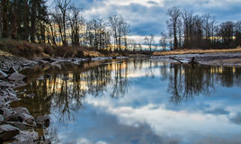Bare Trees Reflected in River Royalty Free Stock Photos