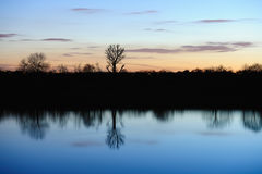 Bare trees reflected in a still river at sunset Stock Photography