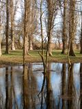Bare trees reflected in water. Reflection of bare trees in water Royalty Free Stock Images