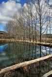 Bare trees reflecting on lake Stock Photography
