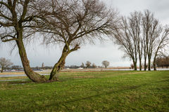 Bare trees at the river banks Stock Image
