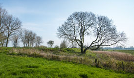 Bare trees in a rural landscape. Whimsically shaped bare trees in a picturesque landscape at the end of the winter season Stock Photo