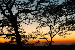 Bare trees silhouettes Royalty Free Stock Image