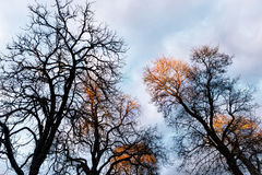 Bare trees on sky Stock Photos
