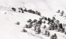 Bare trees in snow from above, Orobie Royalty Free Stock Photos