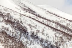 Bare trees in the snow capped mountains, winter background royalty free stock photos