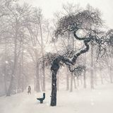 Bare Trees on Snow Covered Landscape Stock Image