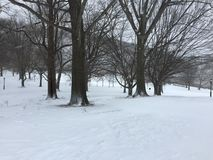 Bare trees in snowy field. Winter park scenery of bare trees along the snow covered fields Royalty Free Stock Photo