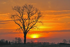 Bare Trees at Sunrise Royalty Free Stock Photo