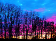 Bare trees at sunset Royalty Free Stock Photos