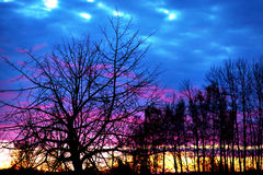 Bare trees at sunset Royalty Free Stock Images