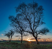 Bare Trees at Sunset. In late Autumn. Mynydd Maendy, Tonyrefail, Porth, Rhondda, Wales Royalty Free Stock Photos
