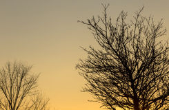 Bare trees at sunset stock images