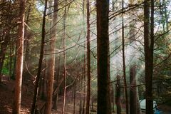 Bare Trees Surrounded by Green Leaved Trees in Forest during Daytime Royalty Free Stock Photos