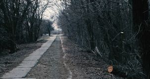 Bare trees surrounding the old abandoned road in the middle of nowere stock footage