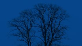 Bare Trees Sway At Night. Bare trees in the winter moving in the wind stock video footage