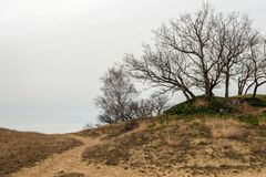 Bare trees on the top of a dune. In a Dutch nature reserve in the winter season Royalty Free Stock Images