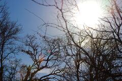 Bare Trees Under Blue Sky Stock Photos
