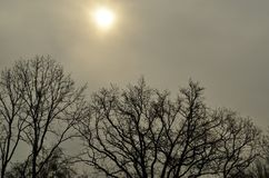 Bare trees under the cloudy sky Royalty Free Stock Photo