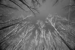 Bare Trees Under Dark Blue Sky In Black And White Stock Image
