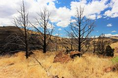 Bare trees. Of Warm Spring Indian Reserves Oregon America royalty free stock image
